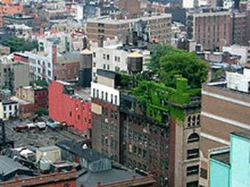 Green roof in Manhattan