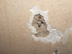 REPAIRING OF PLASTER IN WALLS