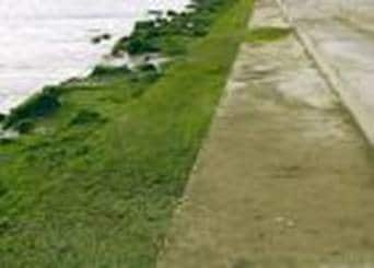 Durability Problems due to Seaweed on concrete