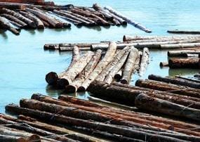 Water Seasoning of Timber