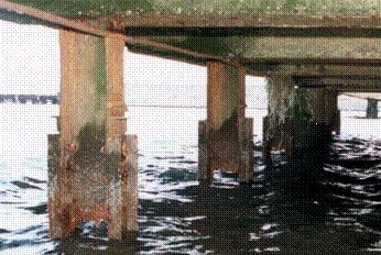 Corrosion of steel pile in marine condition