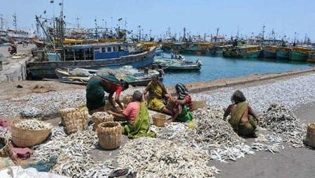 Fishery Harbors
