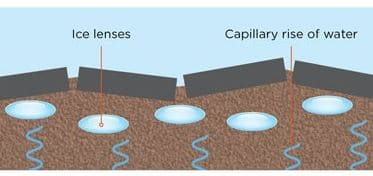 Ice lenses and Capillary Rise of Water