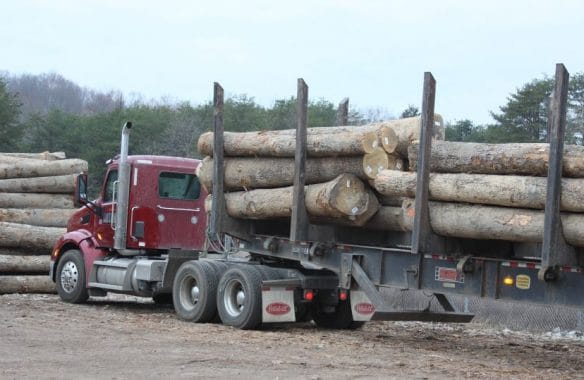 Heavy Timber Logs