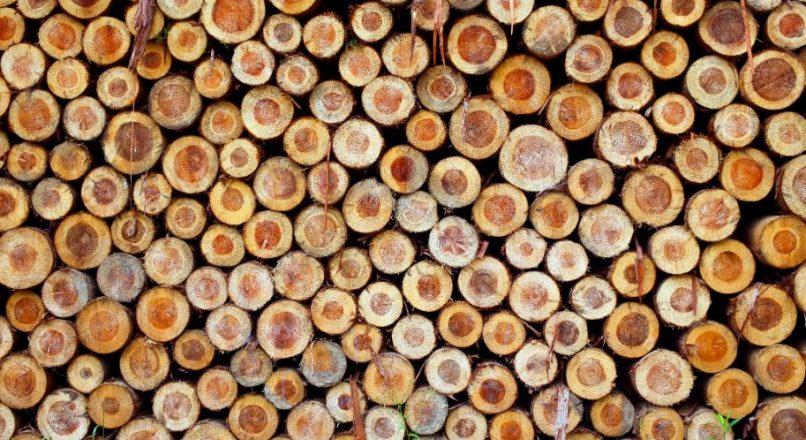 Characteristics of Good Timber